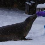 冬の旭山動物園 ~アザラシ~