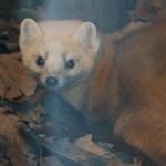 冬の旭山動物園 ~その他動物~