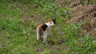 2016年GW 九州&四国名所巡り30 ~男木島の猫③~