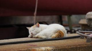 2016年GW 九州&四国名所巡り29 ~男木島の猫②~