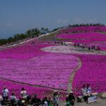 茶臼山高原の芝桜