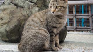 龍泉寺の猫 #1