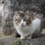 龍泉寺の猫 #2