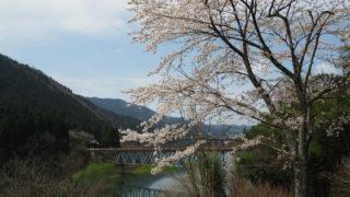 奥矢作湖の桜_1