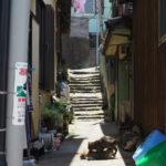 3.篠島・日間賀島周遊3 -篠島の猫-