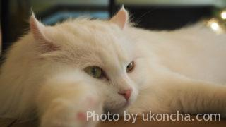 猫カフェ モカラウンジ池袋東口店